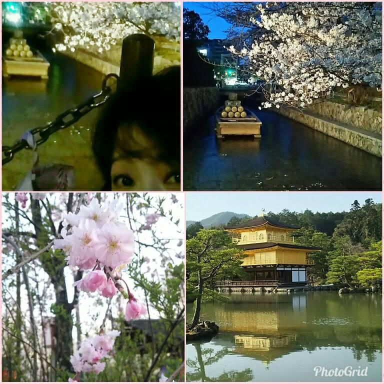京都の様子